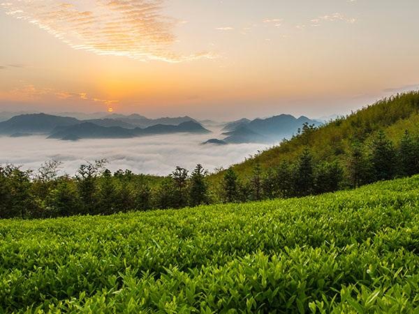 神韵安化龙泉洞、云台山、最美古茶市黄沙坪两日游