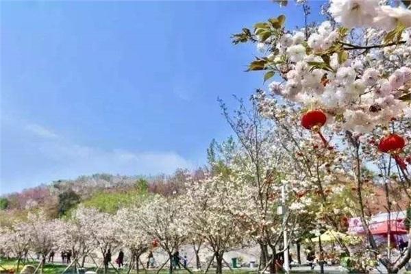 长沙浔龙河樱花谷、田汉文化园一日游