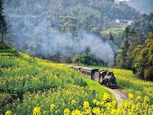 花海与小火车的搭配 来这几个地方赏春色